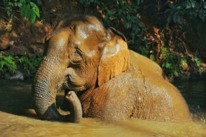 Elephant Valley Chiang Rai – Maybe Thailand's most ethical elephant sanctuary!